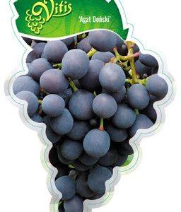 Winorośl winogrono Agat Doński